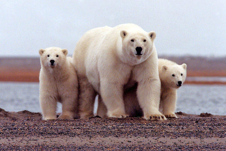 Arktyje – beveik rekordinė kaita: temperatūra pakilo iki 34 laipsnių<br>Reuters/Scanpix nuotr.