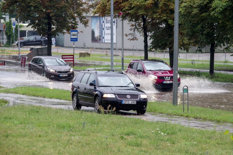 Liūtis Vilniuje.<br>V.Ščiavinsko nuotr.
