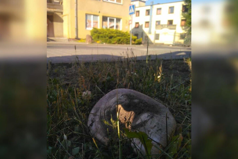 Valgomi grybai auga pačiame miesto centre.<br>G.Kazlos nuotr.