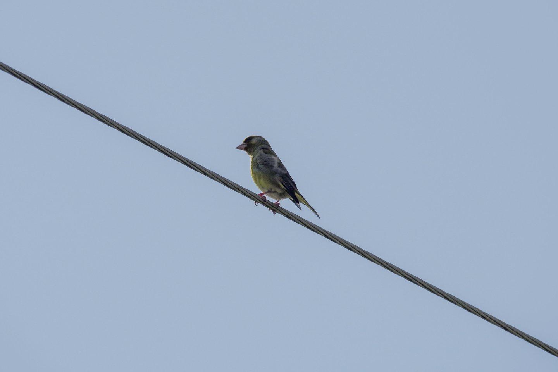 Pasaulyje plinta nauja epidemija, tačiau šį kartą – tarp paukščių.<br>V.Ščiavinsko nuotr.