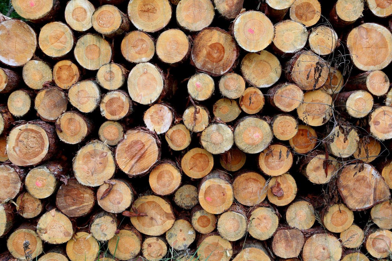 """""""Arbenos"""" vadovas A.Katauskas laukia, kad dabar pradėjusios stabilizuotis medienos kainos po mėnesio dviejų nukris apie 20-25 proc.<br>M.Patašiaus nuotr."""