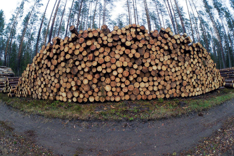"""""""Arbenos"""" vadovas A.Katauskas laukia, kad dabar pradėjusios stabilizuotis medienos kainos po mėnesio dviejų nukris apie 20-25 proc.<br>V.Ščiavinsko nuotr."""