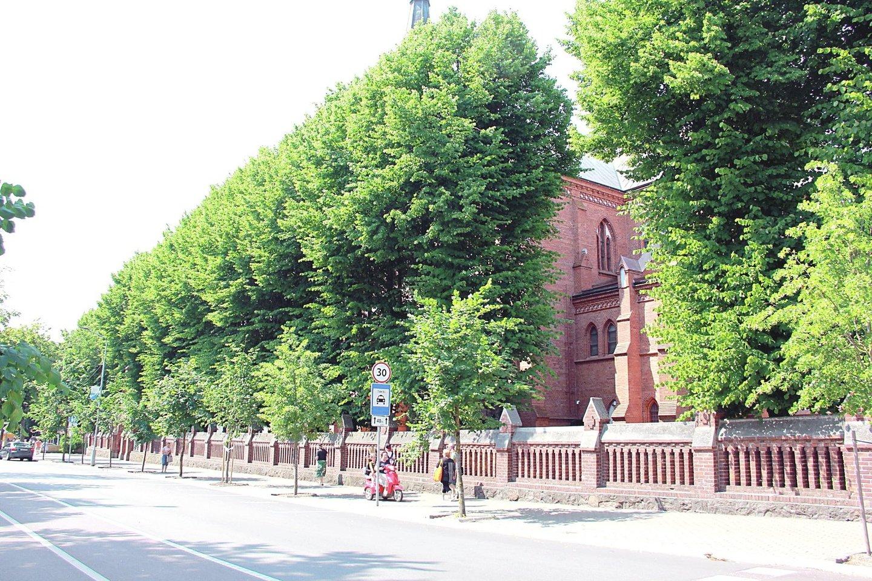 Palangos bažnyčios šventorių iš Vytauto gatvės pusės juosia daugiau nei 20 liepų.<br>E.Kazlaučiūnaitės nuotr.