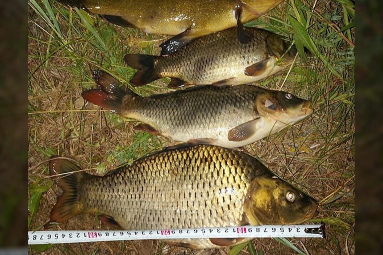 Sugautos žuvys.<br>Aplinkos apsaugos departamento nuotr.