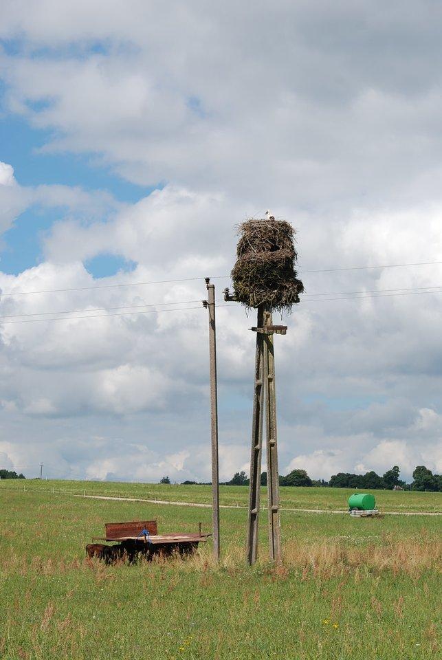 """Gandras pasistatė įspūdingą """"daugiaaukštį"""": toks lizdas gali sverti ir 1,5 tonos.<br>K.Grigaliūnaitės nuotr."""