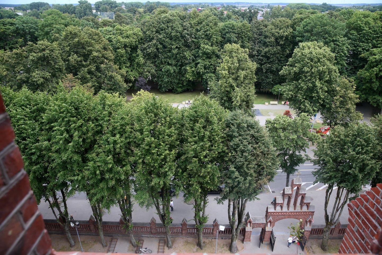 Palangos bažnyčios šventorių iš Vytauto gatvės pusės juosia daugiau nei 20 liepų.<br>R.Danisevičiaus nuotr.