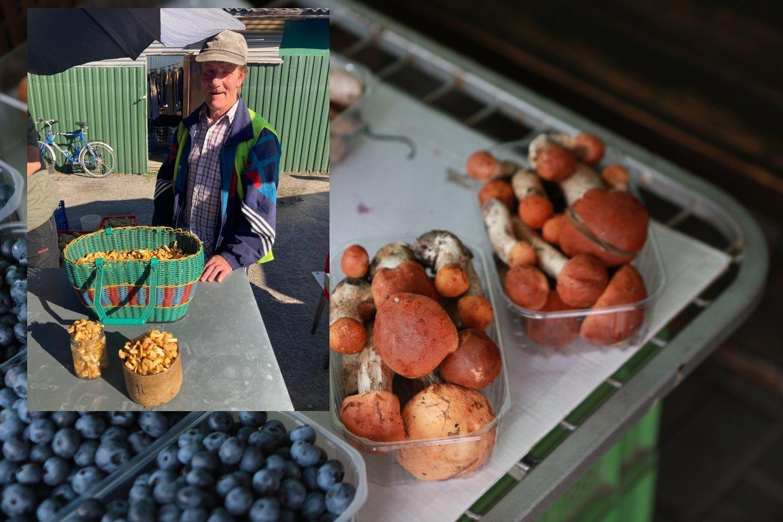 Grybautojas Vytautas per dieną prirenka 8-9 litrus voveraičių ir viską parduoda.ų ir<br>Lrytas.lt fotomontažas