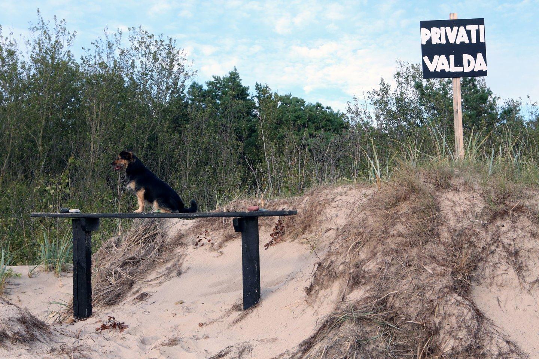Kėdainių rajono savivaldybėje nėra nei vienos maudymvietės, kurioje būtų galima poilsiauti ir maudytis su šunimis.<br>M.Patašiaus asociatyvi nuotr.