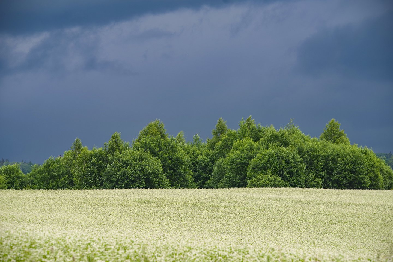 Žemės ūkis vis labiau įtraukiamas į kovą su klimato kaita.<br>V.Ščiavinsko nuotr.