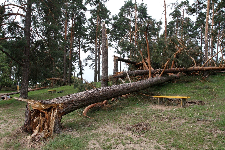 Išlaužyti medžiai.<br>M.Patašiaus asociatyvi nuotr.