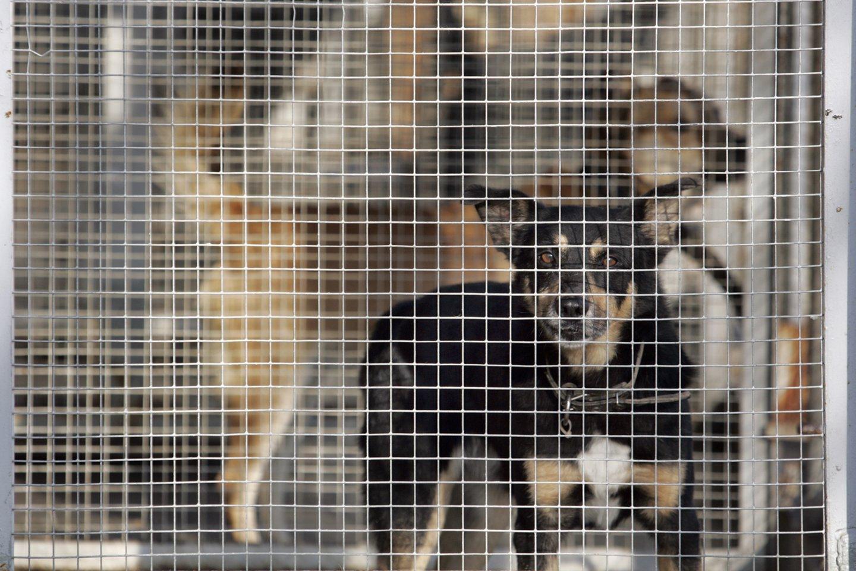 Gyvūnų kankintojams – aiški žinutė: advokatai atskleidžia, kas lėmė pergalę byloje.<br>V.Balkūno nuotr.