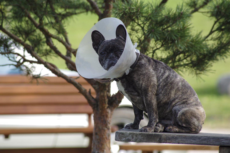 Gyvūnų kankintojams – aiški žinutė: advokatai atskleidžia, kas lėmė pergalę byloje.<br>V.Ščiavinsko nuotr.