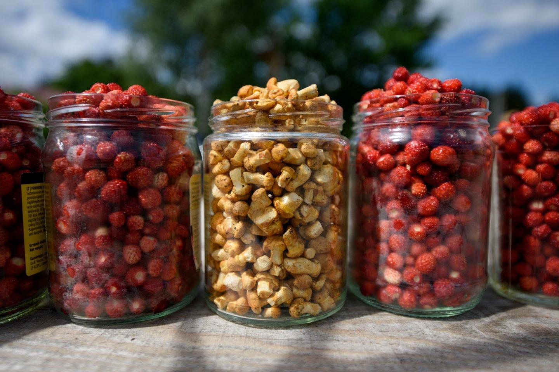 Prasidėjus miško gėrybių sezonui primena, kaip atsakingai grybauti ir uogauti.<br>D.Umbraso nuotr.