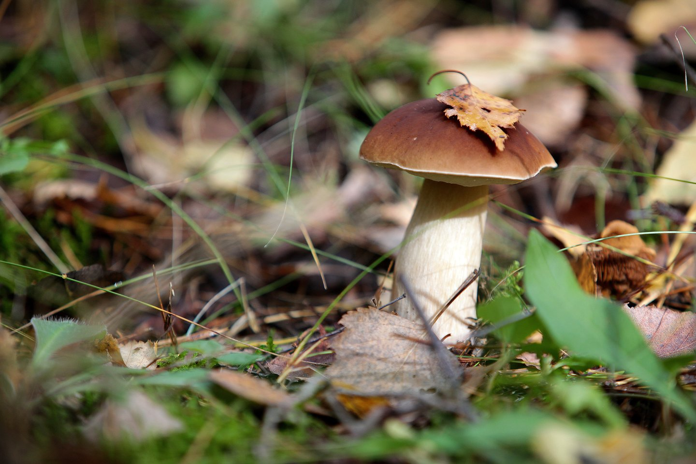 Prasidėjus miško gėrybių sezonui primena, kaip atsakingai grybauti ir uogauti.<br>V.Balkūno nuotr.