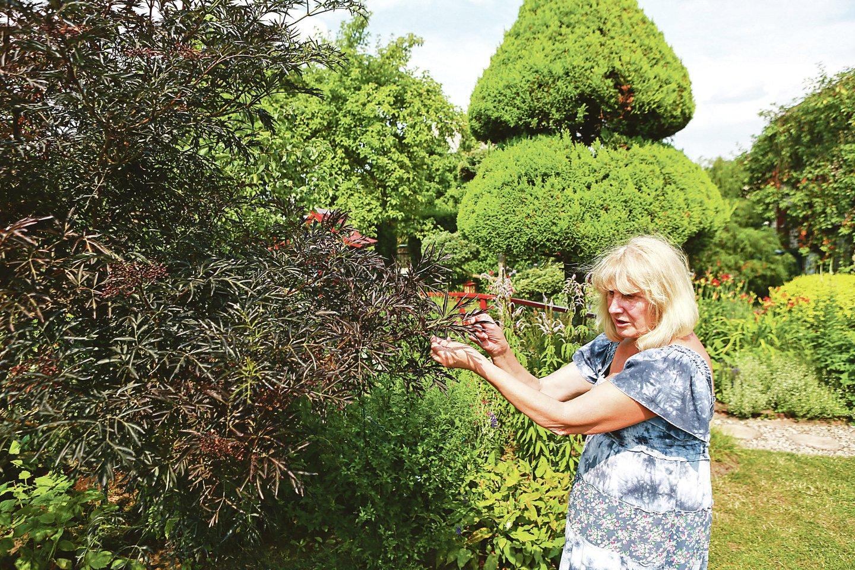 S.Daunytė apleistą kiemą, kuriame vešėjo dilgėlės, pavertė žaliuojančia oaze.<br>G.Bitvinsko nuotr.