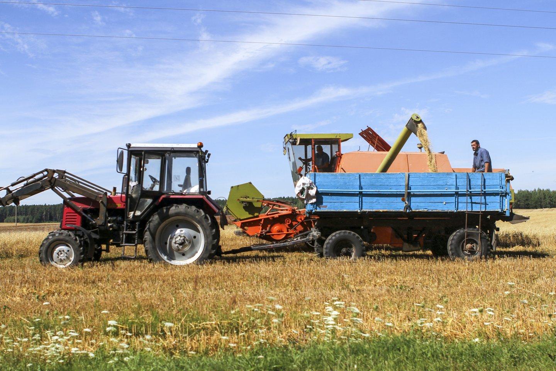 Kaitra grūdininkams neleidžia tikėtis rekordinio derliaus.<br>V.Ščiavinsko nuotr.