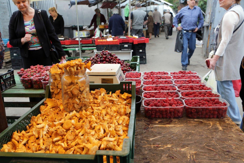 Rytinę ir centrinę Europą alinanti sausra verčia trauktis Lietuvos grybų perdirbėjų verslą. Kai kurie grybų perdirbėja įspėja, kad voveraitės šiemet bus kaip niekada brangios.<br>P.Mantauto nuotr.