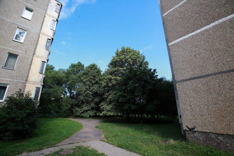 Norint imtis statybų, reikėtų iškirsti kelias dešimtis gaivą suteikiančių medžių.<br>G.Bitvinsko nuotr.