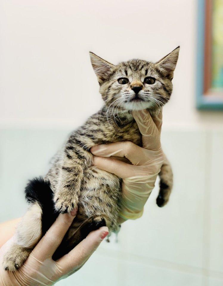 Nuaro gyvūno globos namuose – katinukų jūra.<br>Nuaro nuotr.