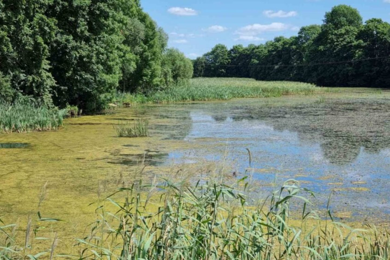 Žydinčiuose vandens telkiniuose maudytis nerekomenduojama, nes tokios maudynės gali baigtis stipriomis alerginėmis reakcijomis.<br>A.Kasparavičiaus nuotr.