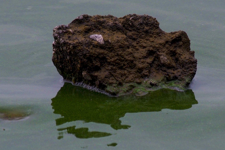 Žydinčiuose vandens telkiniuose maudytis nerekomenduojama, nes tokios maudynės gali baigtis stipriomis alerginėmis reakcijomis.<br>V.Ščiavinsko nuotr.