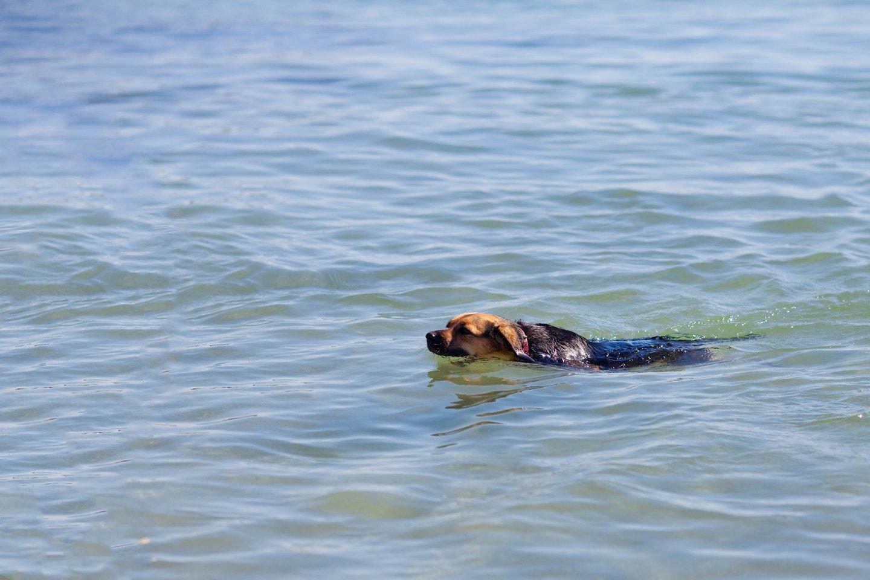 Lazdijų rajone skendo šuo.<br>123rf.com nuotr.