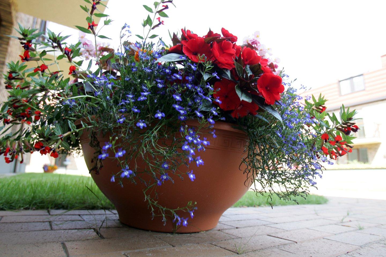 """Verkių gatvėje naujai pastatytame gyvenamųjų namų kvartale """"Verkių slėnis"""" aplinka apželdinta gėlynais. Gėlės, želdiniai, aplinka, priežiūra<br>V.Balkūno nuotr."""