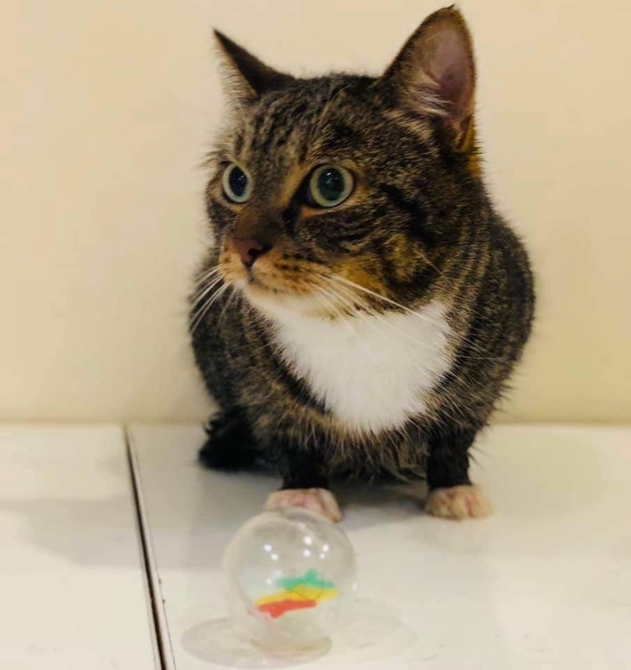 Katė, kurios vardas Juka, prieš ketverius metus turėjo šeimininkus, tačiau tai nebuvo geri ar atsakingi žmonės.<br>Nuaro nuotr.