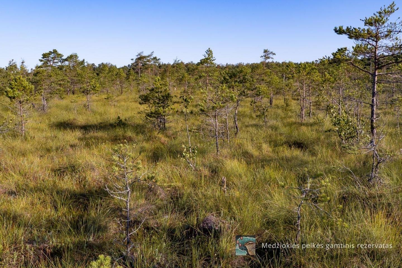 Medžioklės pelkės rezervatas