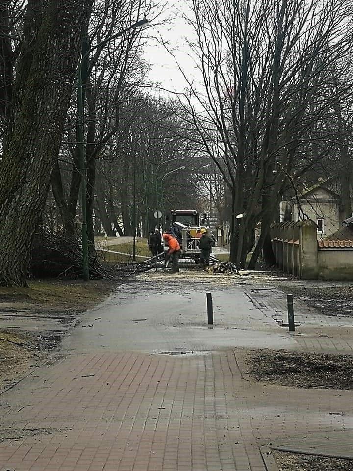 Medžių kirtėjai įsisuko ir į Skulptūrų parką.<br>Visuomenininkų nuotr.
