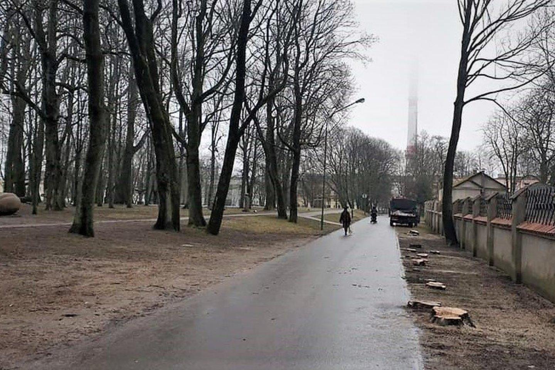 Medkirčių pėdsakai Skulptūrų parke.<br>Visuomenininkų nuotr.