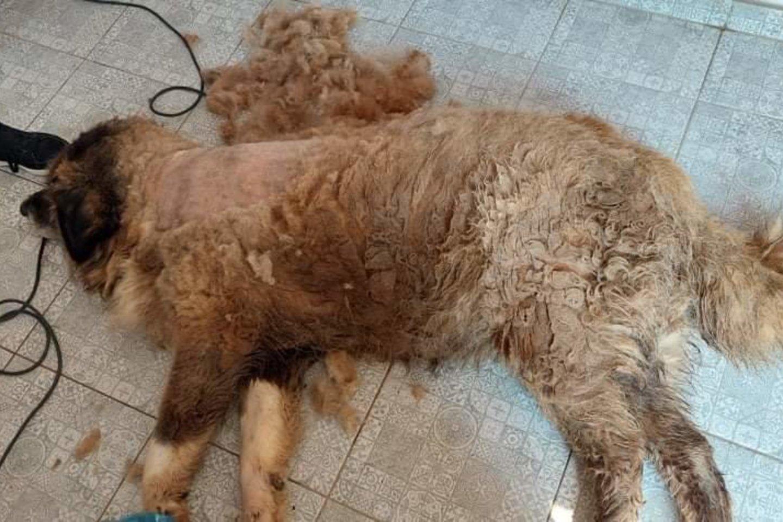"""Po moters mirties Jonavos rajone, artimieji turtą išsidalijo, o šunį paliko likimo valiai.<br>""""Nuaro"""" nuotr."""