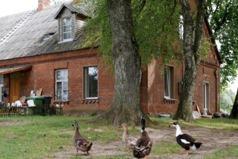 Šalia buvusios mokyklos auga didžiuliai medžiai, gal net šimtamečiai.<br>A.Švelnos nuotr.
