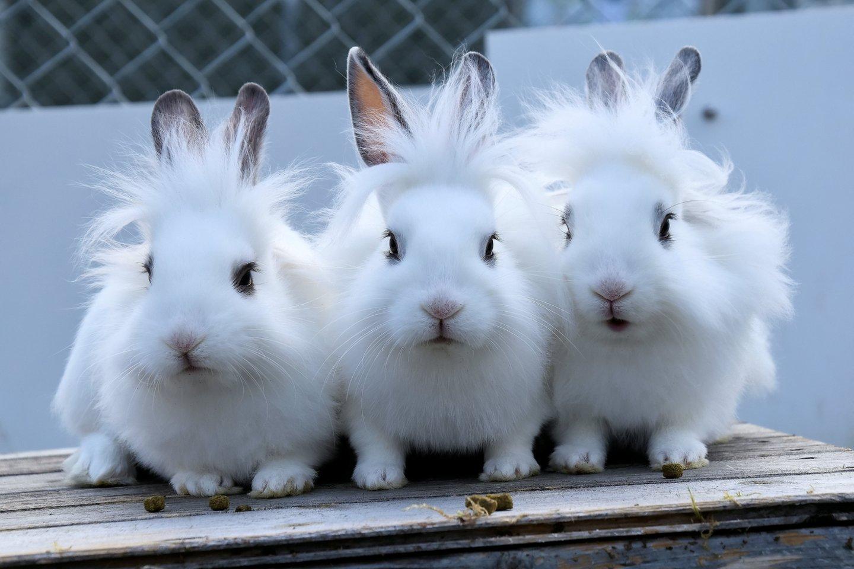 Gyvūnų gerovė ir vėl pakibo ant plauko: sieks uždrausti bandymus su gyvūnais ir prašo pagalbos.<br>SWNS/Scanpix nuotr.
