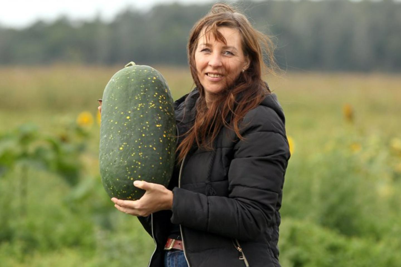 V.Rakauskaitė-Žukienė šią vasarą užaugino rekordiškai daug įvairių arbūzų, kad jų visų nebesuskaičiuoja.<br>A.Švelnos nuotr.