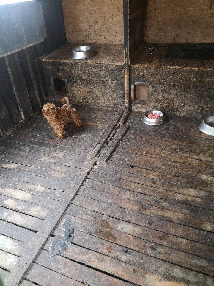 Prokuratūra atnaujino ikiteisminį tyrimą dėl šunų suluošinimo Jurbarko veisykloje.<br>VMVT Tauragės departamento nuotr.