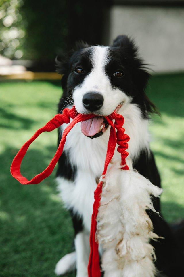 Ar mokame vedžioti šunį?<br>pexels.com nuotr.