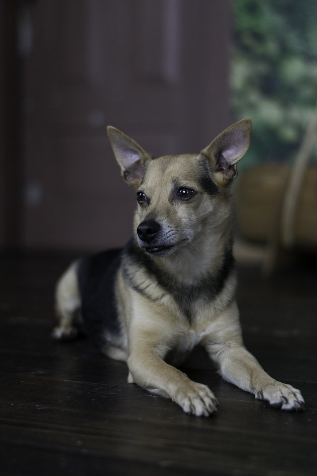 """Ką daryti, kad vaikščioti su šuniu, o ir šuniui – su jumis, būtų smagu, pasakoja gyvūnų elgsenos specialistė, kinologė ir kaniterapeutė Ugnė Nedzinskaitė iš VšĮ """"Gyvūnų gerovės iniciatyvos"""".<br>Asmeninio albumo nuotr."""