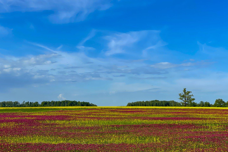 Nuo 2011 metų žemės ūkio paskirties žemė Lietuvoje, Latvijoje ir Estijoje pabrango daugiau nei 3 kartus ir kol kas nėra prielaidų tendencijai keistis.<br>V.Ščiavinsko nuotr.