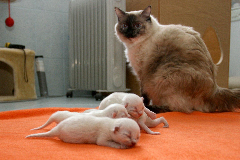Vilniaus r. ką tik gimusius 5 kačiukus sukišo į maišą ir išmetė: išgyveno tik du.<br>M.Patašiaus asociatyvi nuotr.