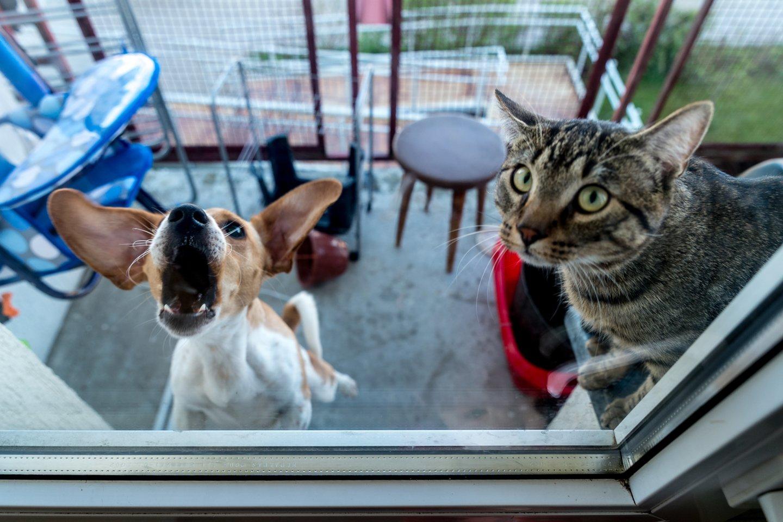 Šuo ir katė.<br>V.Ščiavinsko asociatyvi nuotr.