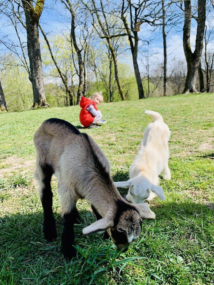 V.Bagdonaitė-Tiknienė neprisimena, kam jai prireikė ožkų.<br>Asmeninio archyvo nuotr.