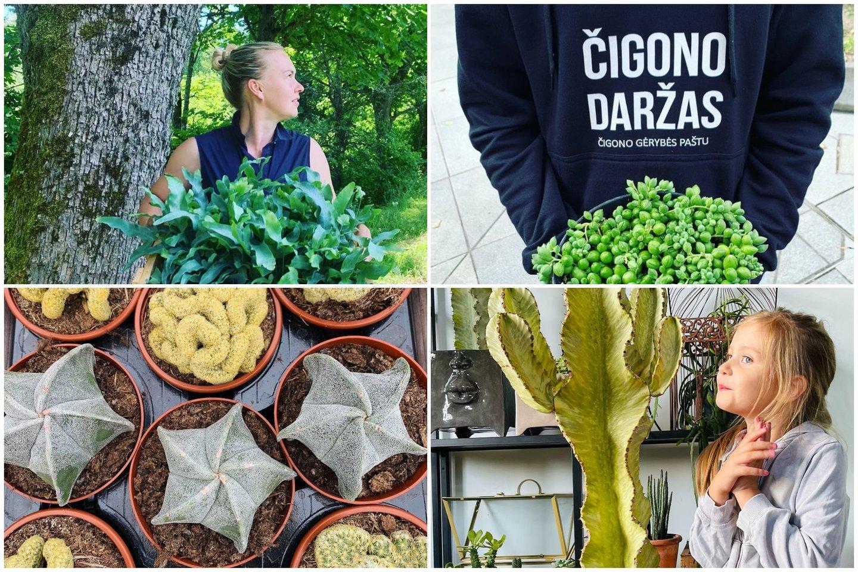 """Egzotinių augalų internetinės parduotuvės """"Čigono daržas"""" įkūrėja V.Bagdonaitė-Tiknienė augalams skyrė geriausią savo namų dalį.<br>Asmeninio archyvo nuotr."""