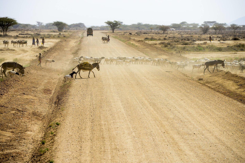 Apskaičiuota, kad maždaug 2,1 mln. Kenijos gyventojų dabar kenčia badą.<br>IM/Scanpix nuotr.