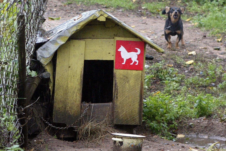 Idėja steigti gyvūnų gerovės kontrolieriaus pareigybę Seime patyrė krachą.<br>V.Kapočiaus nuotr.