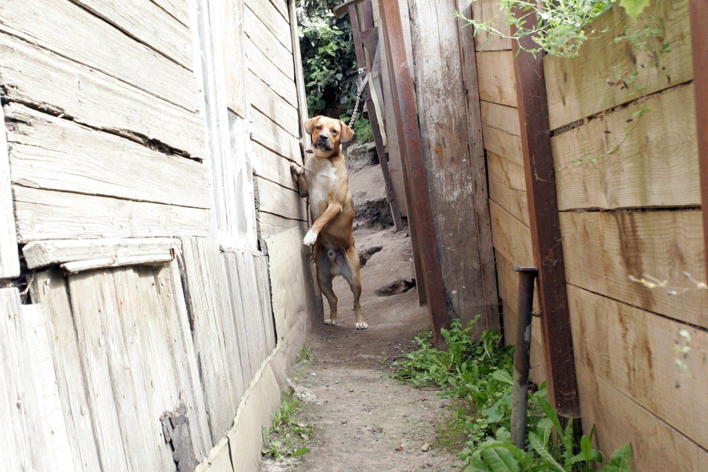 Idėja steigti gyvūnų gerovės kontrolieriaus pareigybę Seime patyrė krachą.<br>P.Mantauto nuotr.