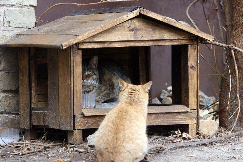 Idėja steigti gyvūnų gerovės kontrolieriaus pareigybę Seime patyrė krachą.<br>T.Bauro nuotr.
