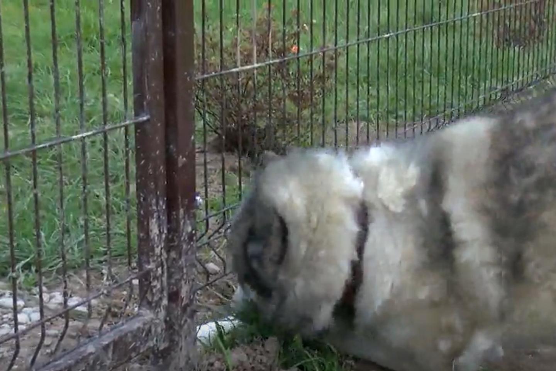 """Minint pasaulinę gyvūnų dieną klaipėdiečiams buvo suteikta proga susipažinti su prieglaudos """"Nuaras"""" beglobiais. Čia šiuo metu glaudžiasi per šimtą kačių ir šunų.<br>Stop kadras"""