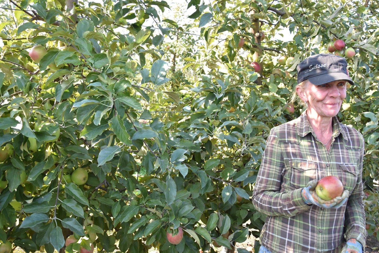 47 hektarų sode, kuriame auga net keturiasdešimt skirtingų rūšių obuolių.<br>A.Srėbalienės nuotr.