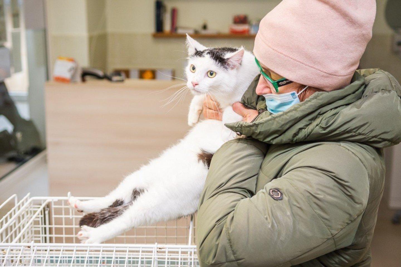 Žinia augintinių šeimininkams – paženklinti gyvūnus būtina, bet bus paprasčiau.<br>R.Ančerevičiaus nuotr.